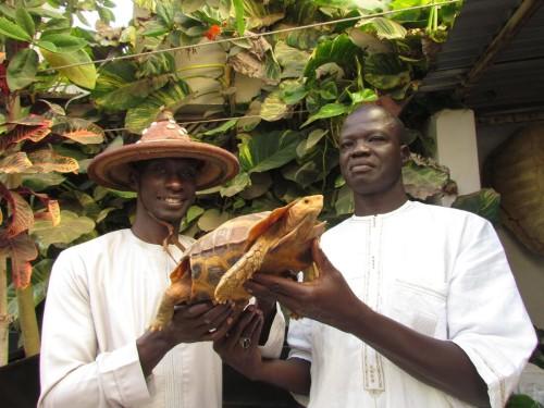Aziz and Kader holding a large male Kinixys erosa at the ACI facility