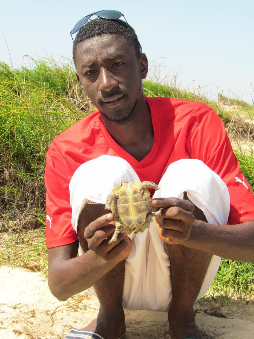 Thialaw holding a juvenile Kinixys homeana