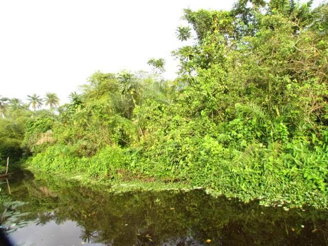 Typical Kinixys erosa habitat in Oueme, Benin